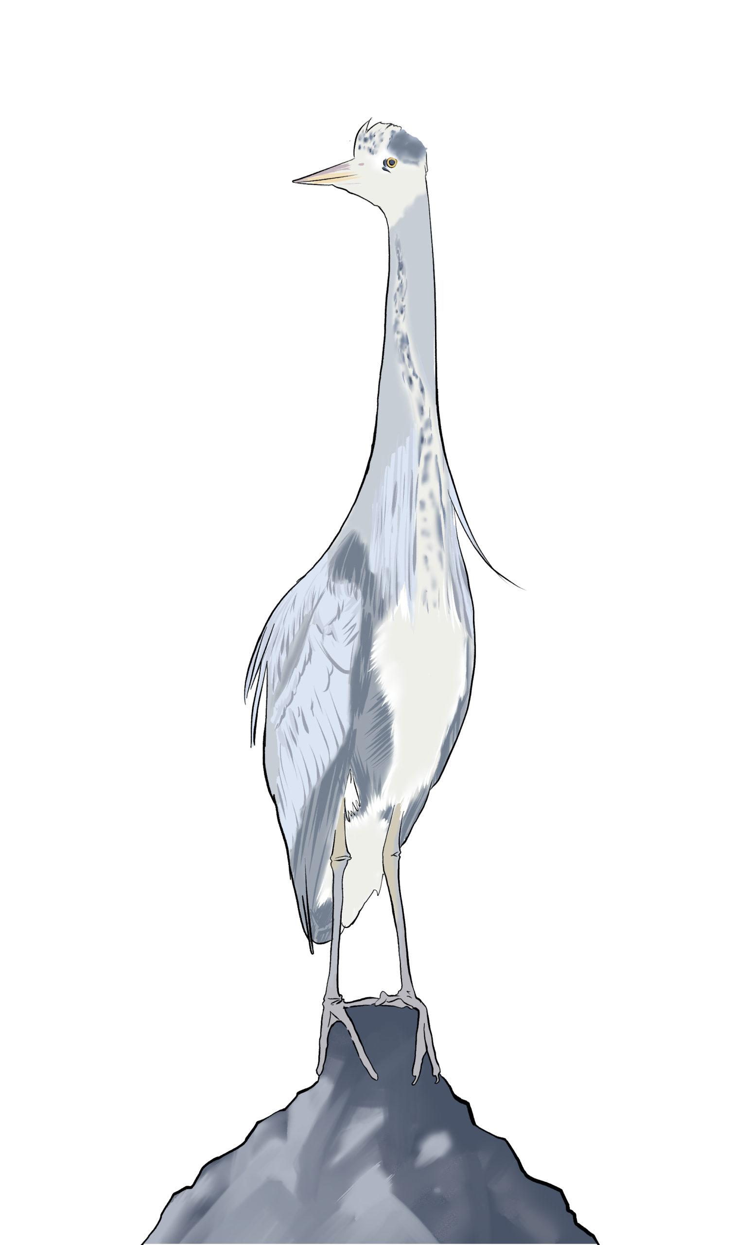 Wasservogel_rgb